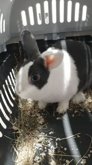 Rabbit with cage, bedding and hay for sale | London, South