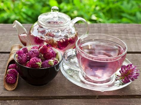 Red Clover Tea- How to Make & Benefits | Organic Facts