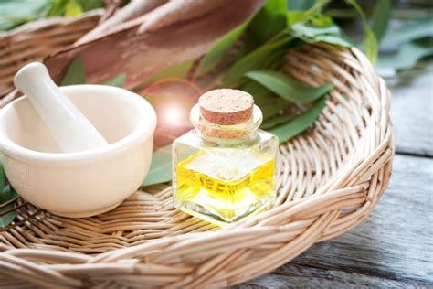 Eucalyptus Oil Uses: How It Can Help Your Health | Reader