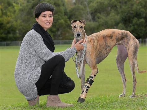 Greyhound rescue: How Millie got her bionic leg | Dogs of