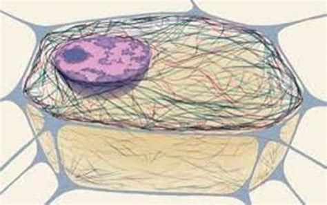10 Facts about Cytoskeleton   Fact File