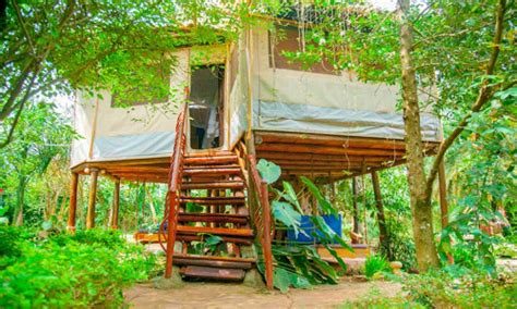 Toogood Uganda : 20% OFF A Night In A Tree House At