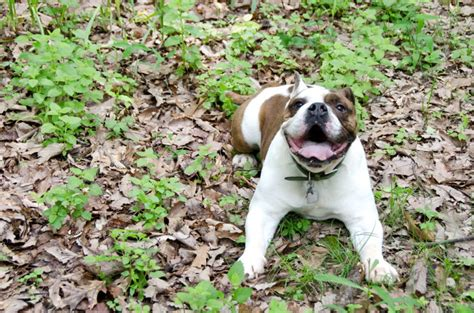 Dog Constipation: Symptoms and Treatment - DogAppy