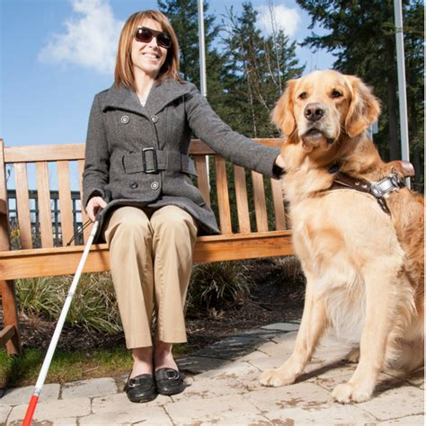 The Law of Emotional Support Animals in Rental Properties