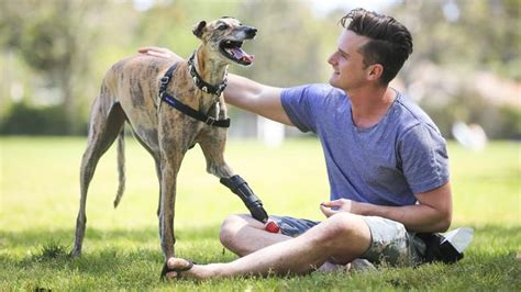 Greyhound rescue: How Millie got her bionic leg | Dogs of OZ